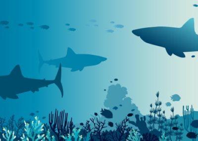 Meer Haie